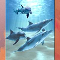 """dolphins"" by RichardMurrey"