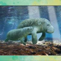 """manatees2"" by RichardMurrey"