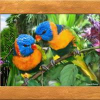 """love birds"" by RichardMurrey"