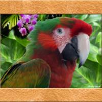 """macaw"" by RichardMurrey"