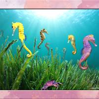 """sea horses"" by RichardMurrey"