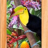 """toucan"" by RichardMurrey"