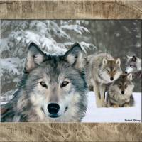 """wolf pack"" by RichardMurrey"
