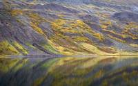 Fall Tundra Color and Lake, Eastern Iceland