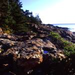 """acadia vegitated coast panoramic"" by RichardBaumer"
