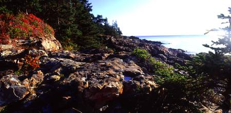 acadia vegitated coast panoramic