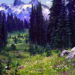 """mt rainier meadow panoramic"" by RichardBaumer"