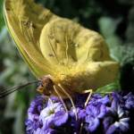 """""""Butterfly on a Purple Flower"""" by ThePictureMonkey"""