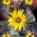 """Black-eyed Susan"" by karmadreams"
