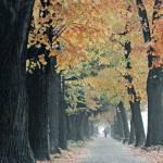 """Kej jesen setac"" by perovict"