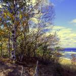 """birch and lake superior"" by RichardBaumer"