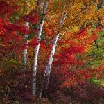 """fall color adj for imagekind - toned down"" by RichardBaumer"