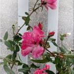 033 Last of summer flowers