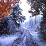"""kings lake snowy road"" by RichardBaumer"