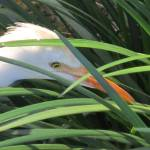 """Heron"" by Jamault"