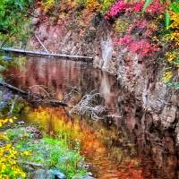 Autumn Reflection by Lisa Rich
