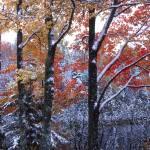 """kings canyon trees"" by RichardBaumer"