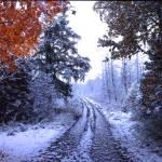 """""""kings lake snowy road"""" by RichardBaumer"""