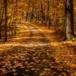 """Hidden Lake Gardens Autumn"" by ZeipekisPhotography"