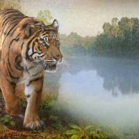 tiger along the river Art Prints & Posters by r christopher vest