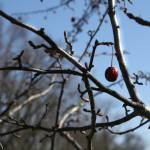 """""""Cherry2-Signed"""" by GeckoPhotography"""