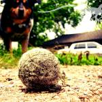 """""""Unsuspecting Tennis Ball"""" by GeckoPhotography"""