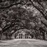 """""""Oak Alley in Black and White"""" by beecreekphotography"""