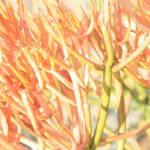 """""""Fire Bush"""" by jeanclarke"""