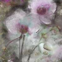 SUGGESTION OF AN ORCHID Art Prints & Posters by SUSAN LIPSCHUTZ