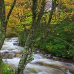 """""""fall-trees-on-the-bank"""" by rouser"""