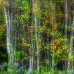 """""""foliage-at-morton-overlook"""" by rouser"""