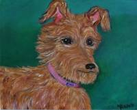 Emi the Irish Terrier