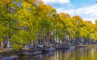 Trees of Amsterdam Canal