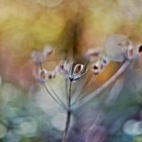 Lightdancer Art Prints & Posters by Maria Ismanah Schulze-Vorberg