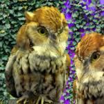 """""""OwlLookN4395"""" by LyndaLehmann"""