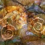 """SeaEclipse22"" by LyndaLehmann"