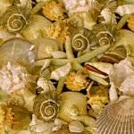 """Ocean Gems 13"" by LyndaLehmann"