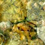 """""""OceanGemsUnderwater24BestMETADSCN0346"""" by LyndaLehmann"""