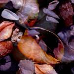 """""""Orbiting Seashells"""" by LyndaLehmann"""