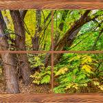 """Forest_Barn_Wood_Picture_Window_Frame_View"" by lightningman"