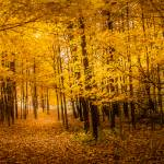 """Autumn Yellow"" by ZeipekisPhotography"