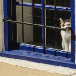 """161029-002 Mesilla Cat in the Window CU 14x11 sign"" by awsheffield"