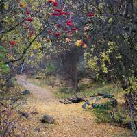 Autumn Path Art Prints & Posters by Cheryl Marie