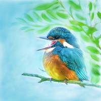 cute kingfisher