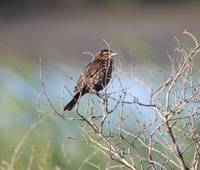 baby brown bird on branches