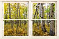 Glorious Golden Forest Window View