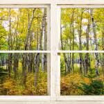 """Golden Forest Rustic White Window View"" by lightningman"