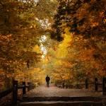 """Woodland Promenade"" by JessicaJenney"