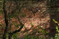 Tree near Brick Wall
