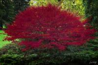 Burning Bush On Fire